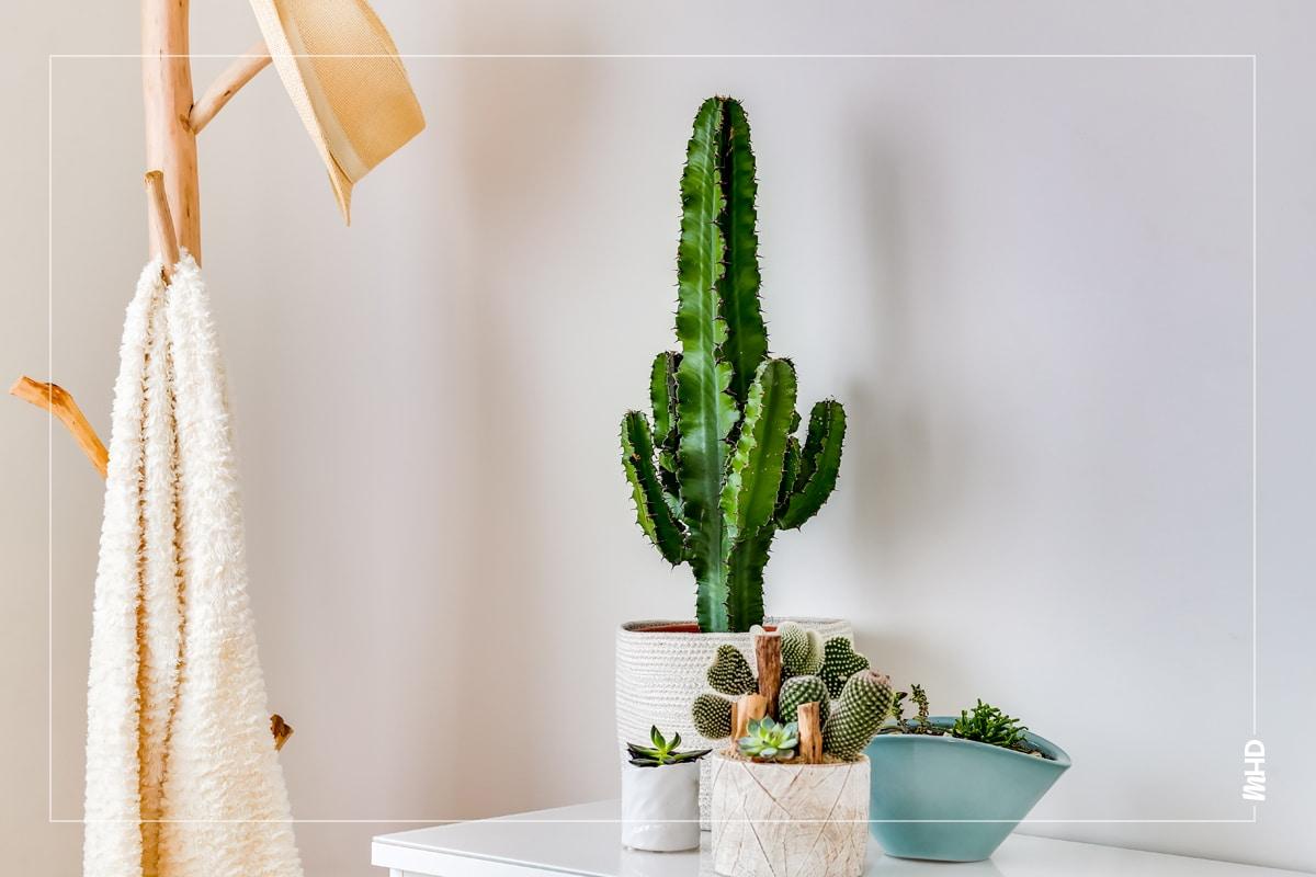Une commode à tiroirs blanche avec plusieurs cactus en pot posés dessus. A sa gauche, un porte manteau en bois