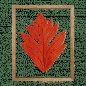 cadre arbre à pain herbier orange