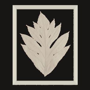cadre arbre à pain herbier blanc