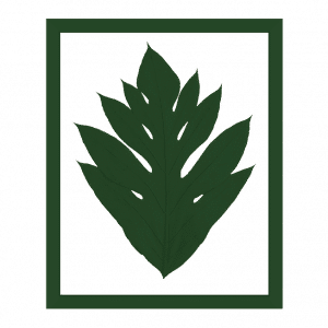 cadre arbre à pain herbier vert cactus