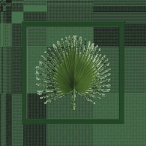 cadre-herbier-washingtonia-bois_0008_cadre-washingtonia-700x700_3cm35