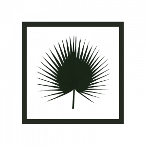 cadre-herbier-washingtonia-bois_0009_cadre-washingtonia-700x700_3cm36