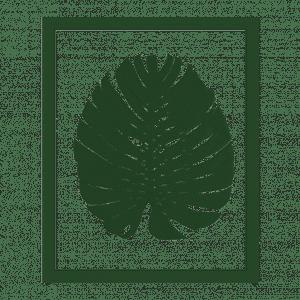 cadre herbier phylomonstera bois vert cactus