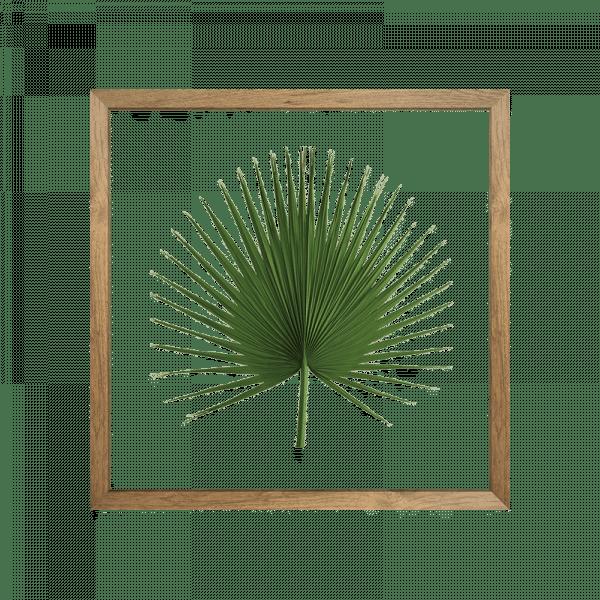 cadre herbier washingtonia vert cactus